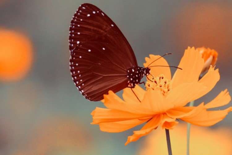 Primavera, a estação das surpresas de Deus em nossa vida