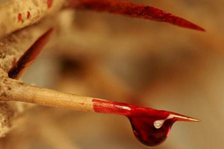 Ladainha do Preciosíssimo Sangue de Cristo